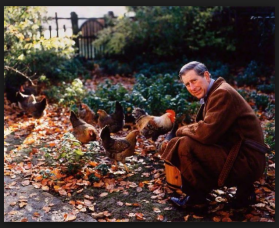 HRH The Prince of Wales feeding his Marans hens at Highgrove