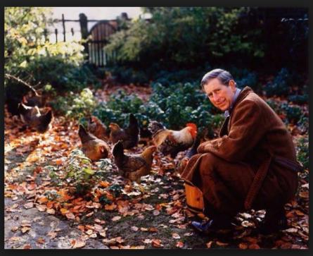 HRH The Prince of Wales feeding his Marans hens at Highgrove