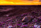 screen-shot-2017-03-09-at-12-01-18-pm desert purple