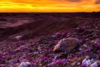 screen-shot-2017-03-09-at-12-01-18-pm desert purple